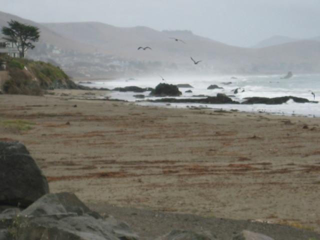Cayoucas Beach, CA - Laura Marinangeli