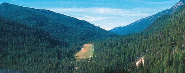 The Frank Church Wilderness... abundant forest.