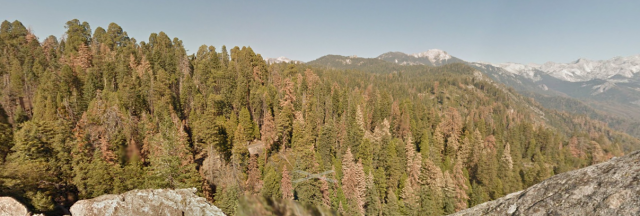 Tree die-off in Sequoia National Forest, from Moro Rock.