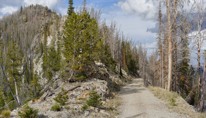 Pinyon Loop Road... Frank Church Wilderness